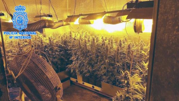Desmantelada una gran plantaci n indoor con 450 plantas de - Policia nacional algeciras ...